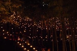 竹灯籠まつり2013年横浜国際プール